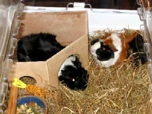 Huisvesting dieren
